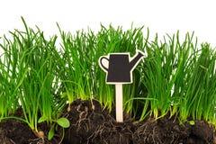 Arbeta i trädgården begrepp: gräs jord, bräde för text Royaltyfri Foto
