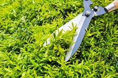 Arbeta i trädgården beskära closeupen Arkivfoto