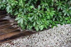 Arbeta i trädgården beståndsdelar - dekorativa växter, vita kiselstenar och träträdgårds- golv royaltyfri foto