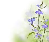 Arbeta i trädgården blommalobelia Arkivbild