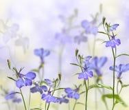 Arbeta i trädgården blommalobelia Arkivfoton