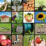 Arbeta i trädgården collage royaltyfri foto