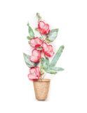 Arbeta i trädgården eller plantera begrepp med att plantera torvkrukor och röda blommor på vit bakgrund Fotografering för Bildbyråer
