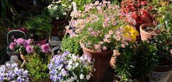 arbeta i trädgården för behållare Royaltyfri Bild