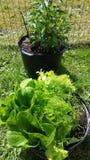 Arbeta i trädgården för behållare Arkivbilder