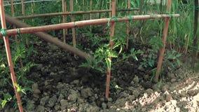 Arbeta i trädgården för grönsaker arkivfilmer