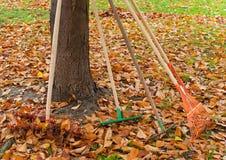 arbeta i trädgården för höst Fotografering för Bildbyråer