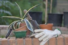 Arbeta i trädgården för hobby Royaltyfria Bilder