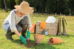 Arbeta i trädgården för kvinna Fotografering för Bildbyråer
