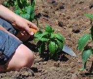 arbeta i trädgården för pojke Arkivbilder