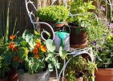 Arbeta i trädgården för terrass- och balkongbehållare Royaltyfria Foton