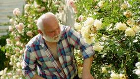 Arbeta i trädgården för trädgårdsmästare Farfar som arbetar i trädgården Yrkesm?ssig tr?dg?rdsm?stare p? arbete stock video