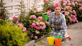 Arbeta i trädgården Flickan arbetar i trädgård av buskevanliga hortensian Blommor för kvinnaträdgårdsmästarevatten med att bevatt arkivfilmer