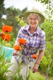 arbeta i trädgården hög kvinna Royaltyfri Bild