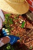 arbeta i trädgården hög kvinna royaltyfria foton
