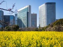 arbeta i trädgården hamarikyuen japan tokyo royaltyfri fotografi