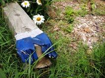 Arbeta i trädgården handskar Arkivfoton