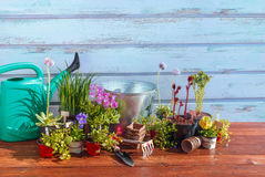 Arbeta i trädgården hjälpmedel och blommor på träbakgrund Royaltyfri Fotografi