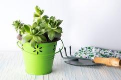 Arbeta i trädgården hjälpmedel och houseleekväxten på en tabell fotografering för bildbyråer