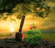 Arbeta i trädgården hjälpmedlet och blommor som planterar på smuts mot härligt s Arkivbilder