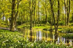 Arbeta i trädgården i Keukenhof, tulpanblommor, dammet och träd Nederländerna arkivbild