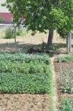 arbeta i trädgården kök Royaltyfria Bilder