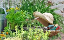 Arbeta i trädgården korgen Royaltyfri Foto