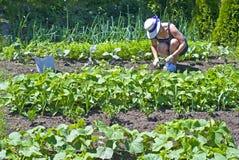 arbeta i trädgården kvinnan Arkivfoton