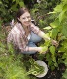 arbeta i trädgården le kvinna Arkivbilder