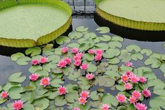 arbeta i trädgården liljavatten Arkivfoton