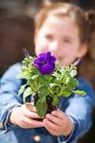 Arbeta i trädgården: Liten flicka hållande ut Pansy Seedling fotografering för bildbyråer