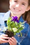 Arbeta i trädgården: Liten flicka hållande ut Pansy Seedling royaltyfri fotografi