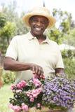 arbeta i trädgården manpensionär Royaltyfri Bild