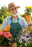 arbeta i trädgården manpensionär Arkivfoton