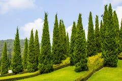 Arbeta i trädgården med grantrees Arkivfoton