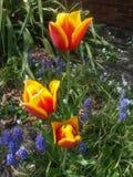 arbeta i trädgården mitt royaltyfri foto