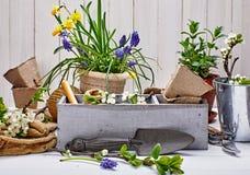 Arbeta i trädgården och floriculturevårblomma med trädgården arkivfoton