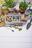Arbeta i trädgården och floriculturevårblomma med trädgården fotografering för bildbyråer