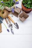 Arbeta i trädgården och floriculturevårblomma med trädgården royaltyfria bilder