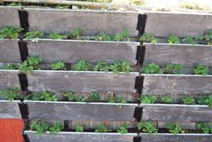 Arbeta i trädgården på den vertikala väggen royaltyfri bild