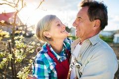 arbeta i trädgården pensionär för par Royaltyfri Bild