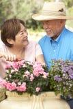 arbeta i trädgården pensionär för par tillsammans royaltyfria bilder