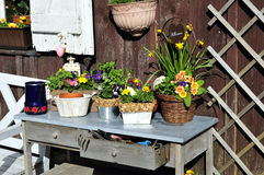 arbeta i trädgården plantera tabellen arkivfoto