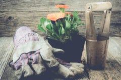 Arbeta i trädgården plats med handskar och blomman med Instagram stil filtrera Royaltyfri Foto