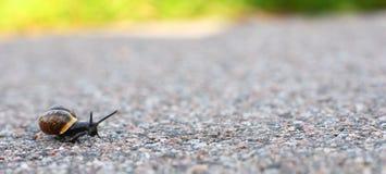 Arbeta i trädgården snailen på vägen Royaltyfri Fotografi
