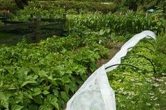 arbeta i trädgården som är organiskt royaltyfria bilder