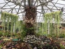 Arbeta i trädgården spetsar Royaltyfri Bild
