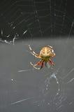 arbeta i trädgården spindeln Fotografering för Bildbyråer