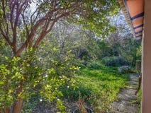 arbeta i trädgården täta blommor för Cherry tulpan för röd fjäder upp white Royaltyfri Fotografi