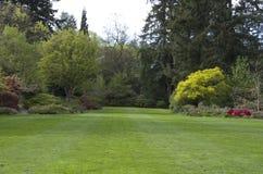 arbeta i trädgården täta blommor för Cherry tulpan för röd fjäder upp white Fotografering för Bildbyråer